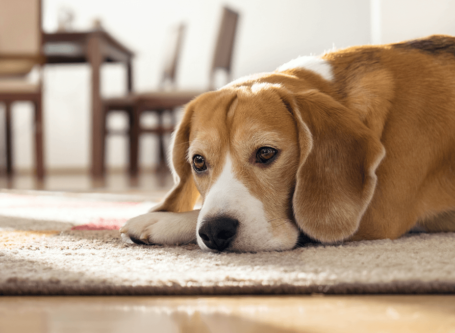 How to keep your dog from tracking dirt into your home